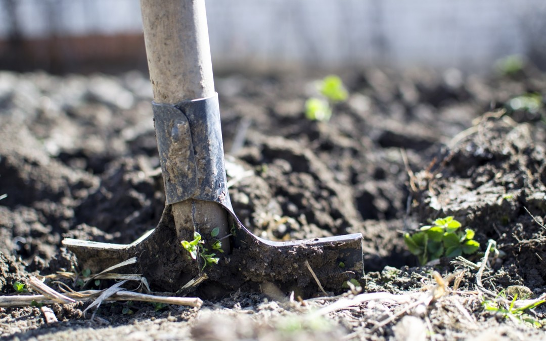 Daily Devotion – How The Seed Grows