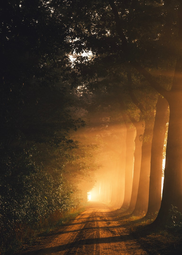 light in the darkness forest
